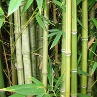 National Bamboo Mission (NBM)